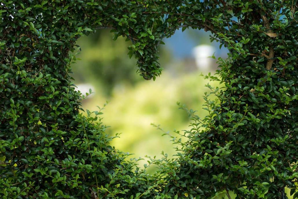 planten hart